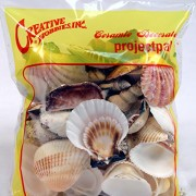 Creative-Hobbies-Sea-Shells-Mixed-Beach-Seashells-Various-Sizes-up-to-2-Shells-Bag-of-Approx-50-Seashells-0-0