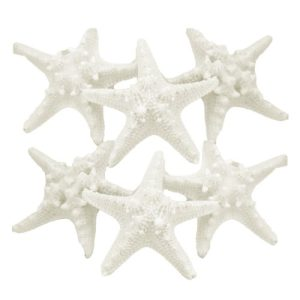 US-Shell-6-Piece-Assorted-White-Armoured-Starfish-0