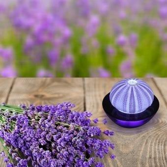 9-SeaThingz-sea-urchin-purple-night-light