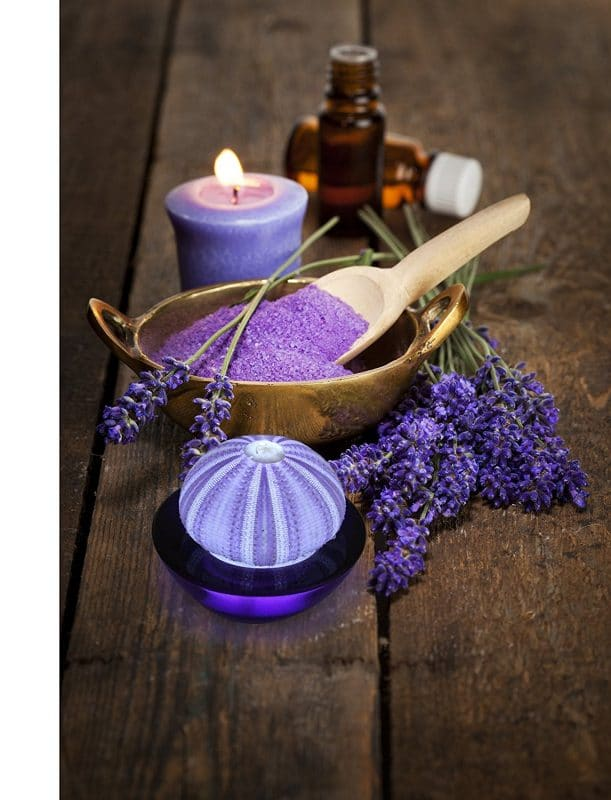 SeaThingz Sea Urchin Purple Night Light