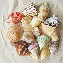 beach-decor-diy-products-for-sale Welcome to Beachfront Decor!