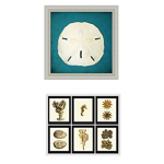 sand-dollar-artwork-150x150 Kitchen Beach Decor Ideas You Can Try Yourself