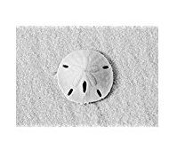 sand-dollar-photography The Best Sand Dollar Artwork You Can Buy