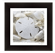 sanibel-island The Best Sand Dollar Artwork You Can Buy