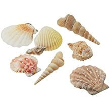 creative-hobbies-seashell-mix-diy Oyster Capiz and Sea Shell Mirrors