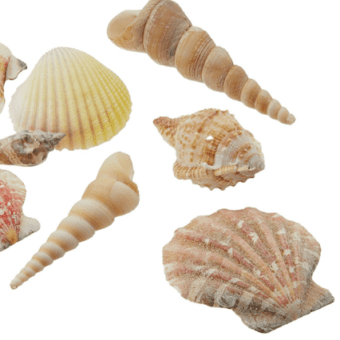 Seashell Decor DIY