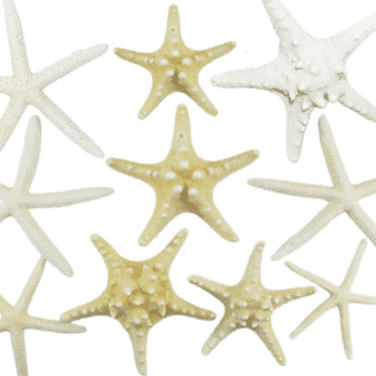 Starfish Decor DIY