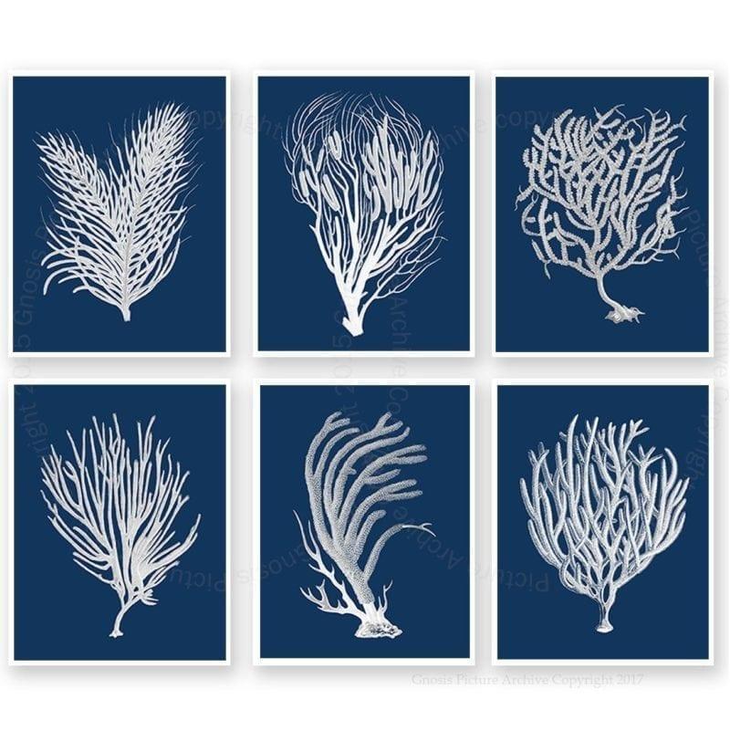 blue-coral-art-set-of-6-800x800 Beautiful Coral Decor
