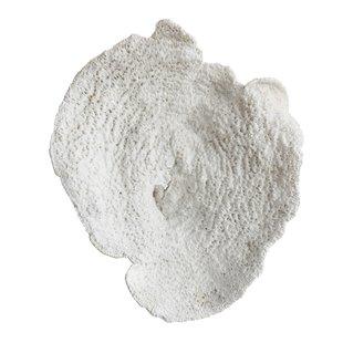 resin-coral-wall-decor-1 Coral Decor