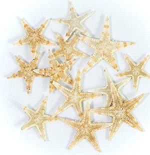 Starfish Decor DIY