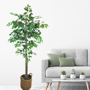 72+Ficus+Tree+in+Basket