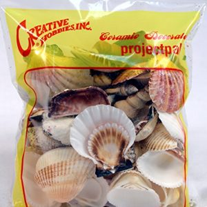 Creative Hobbies Sea Shells Mixed Beach Seashells Various Sizes Up To 2 Shells Bag Of Approx 50 Seashells 0 0 300x300
