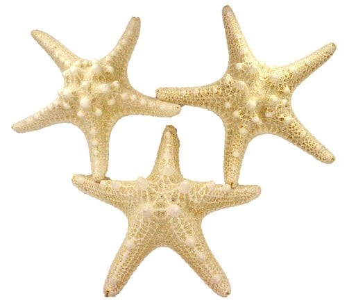 US Shell 3 Piece White Armoured Starfish 5 To 6 Inch 0