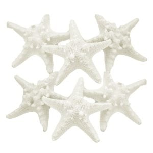 US Shell 6 Piece Assorted White Armoured Starfish 0 300x300
