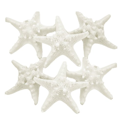 US Shell 6 Piece Assorted White Armoured Starfish 0
