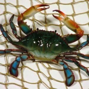 13 6-inch-Maryland-Blue-Crab-Set-of-3-Beach-Tiki-Bar-Wall-Decor-0-0