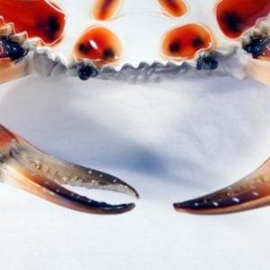 Hand Painted Crab Beach Tiki Bar Wall Mount Decor 6 Dot 0 1 300x300