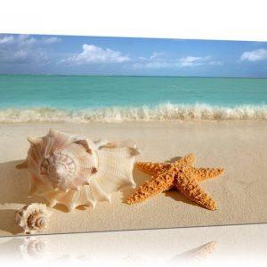Starfish Art