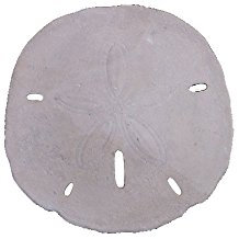 19-Dia-Roman-Stone-Finish-One-Large-Sand-Dollar-Wall-Sculpture Best Sand Dollar Wall Art and Sand Dollar Wall Decor For 2020