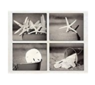 starfish-sand-dollar Best Sand Dollar Wall Art and Sand Dollar Wall Decor For 2020
