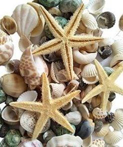 Seashell Wedding Decor