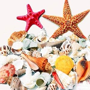 Seashell Decor DIY
