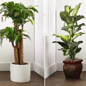 Artificial Plants & Faux Plants